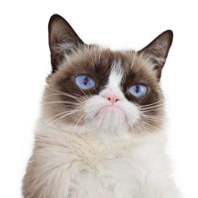 Grumpy-Cat-Contact-Information