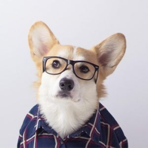 Geordi-La-Corgi-Contact-Information